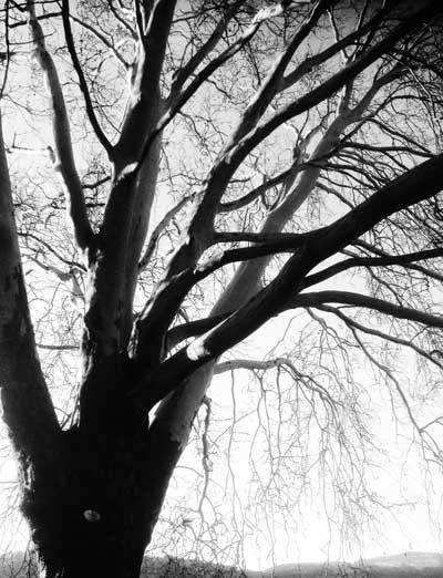 treetalk – zwischen zwischenwelten